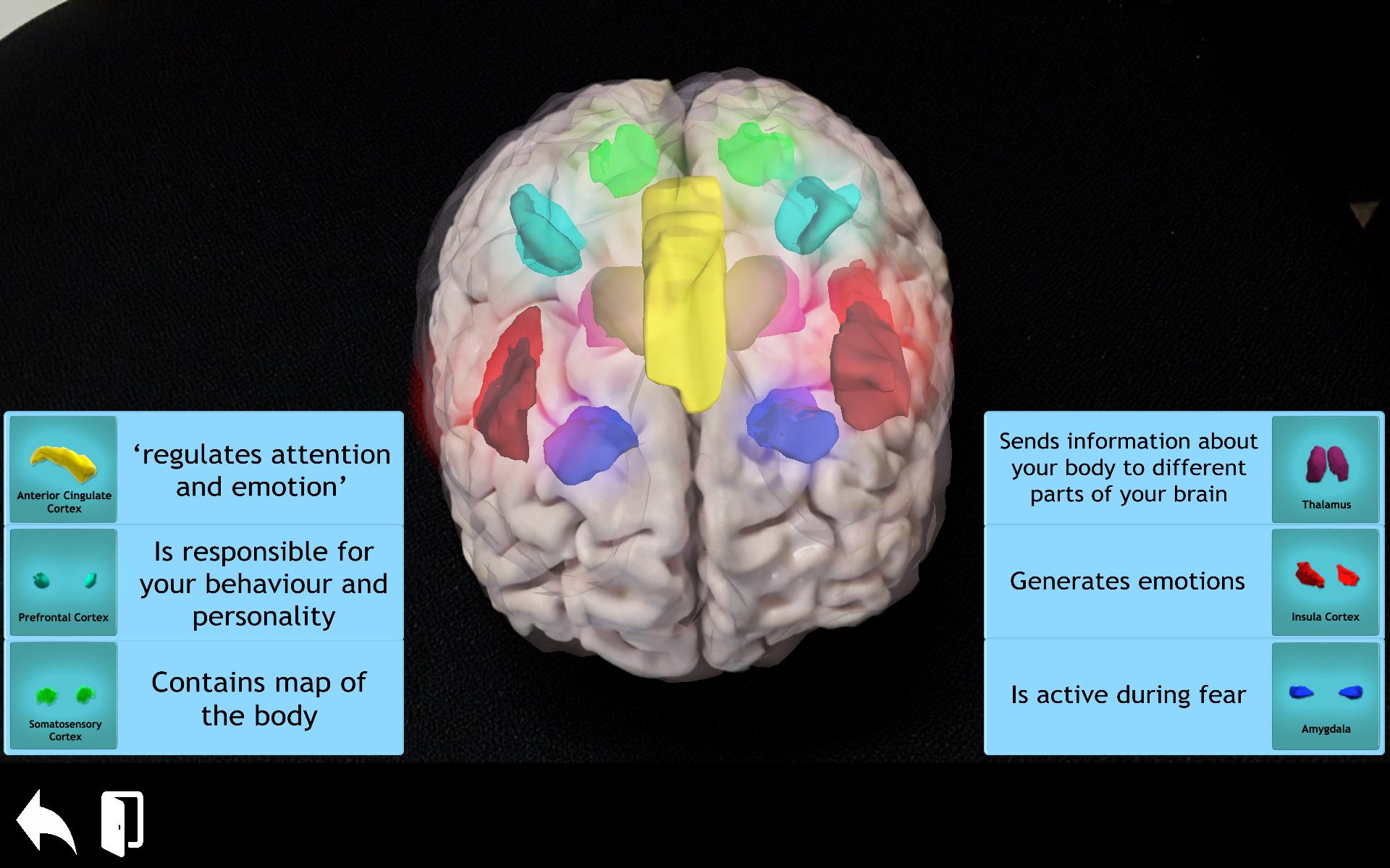 3D_brain_regions
